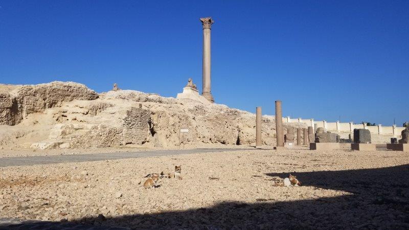 エジプト・アレクサンドリアのポンペイの柱と猫たち