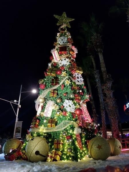 メキシコのロス・カボス。カボ・サン・ルーカスの街。クリスマスのデコレーション。