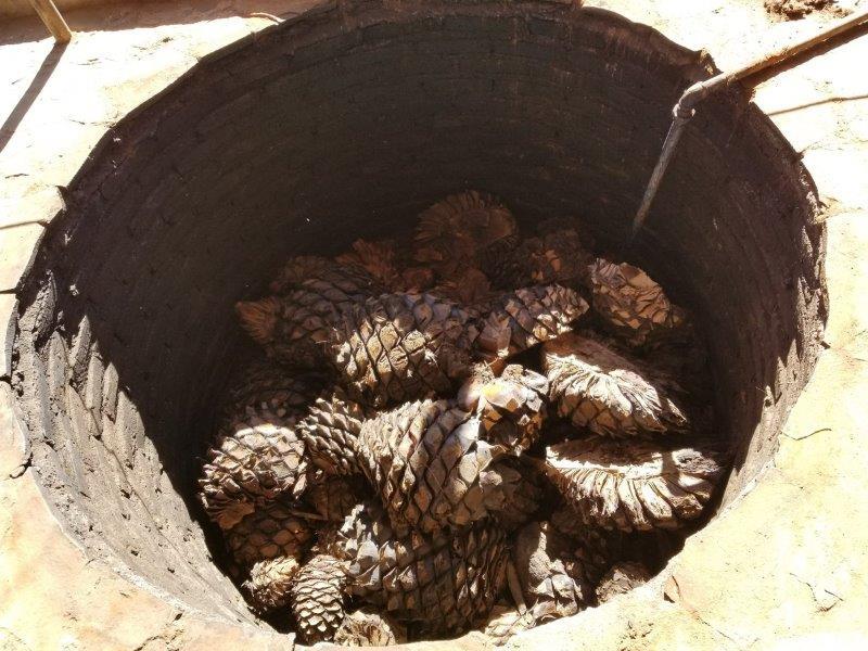 メキシコのテキーラツアー。テキーラ蒸留所でテキーラの作り方を見学。