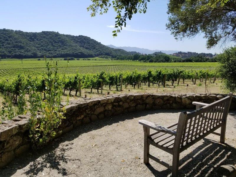 ナパのスタッグス・リープ・ワイナリー (Stags' Leap Winery)。ブドウ畑。