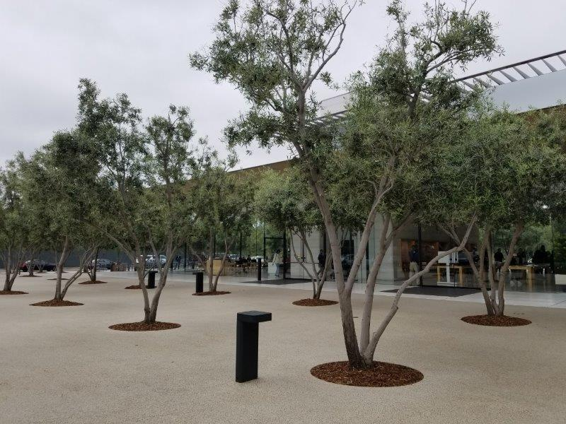カリフォルニア州シリコンバレーのクパチーノにあるアップル本社。モダンなビジターセンター(アップルパーク)。