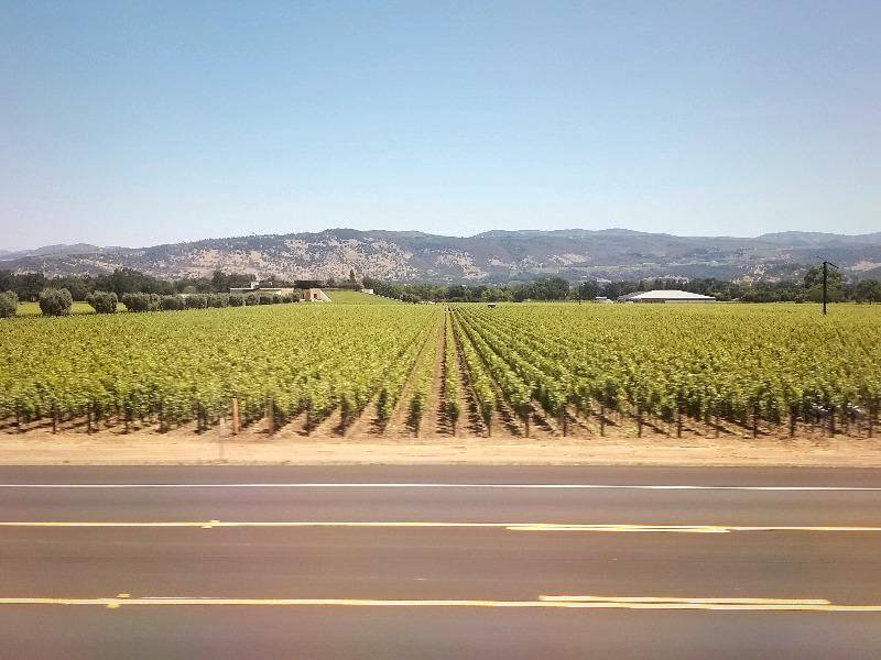 カリフォルニア州・ナパのワイン列車。車窓から眺めるブドウ畑。(ナパバレー・ワイン・トレイン)
