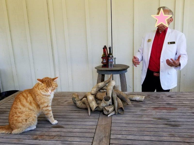 Raymond Vineyards(レイモンド・ヴィンヤード)。ワイナリー見学。猫が参加するワインテイスティング。