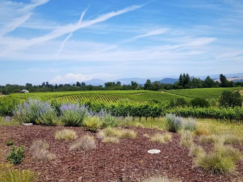カリフォルニア・ソノマのワイナリーとワイン旅行。Macrostie winery