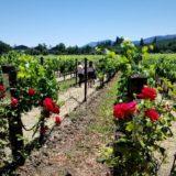 カリフォルニアのワイン旅行。ナパのとソノマのワイナリー巡り。