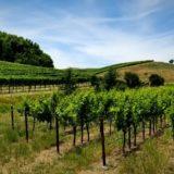 カリフォルニア・ソノマのワイナリーとブドウ畑