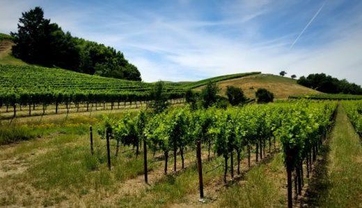 【アメリカ】小旅行にピッタリ♪ ワインの産地ソノマの観光とワイナリー情報