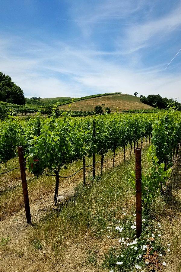 カリフォルニア・ソノマのワイン旅行