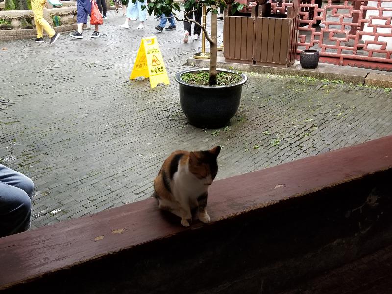 上海の中国庭園「豫園」の猫