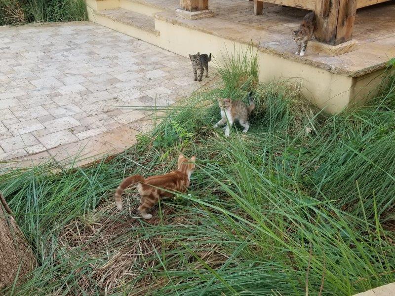 ヨルダンの死海リゾート。ホテル猫。
