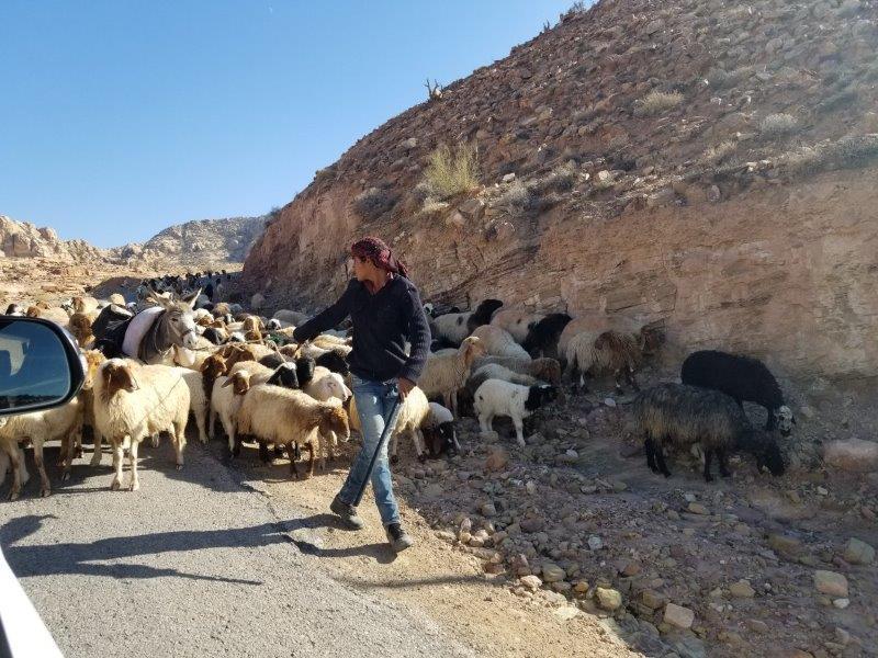 ヨルダン旅行・死海リゾートからペトラまでの道のり。羊飼い。