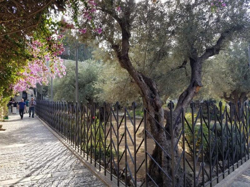 イスラエル旅行・エルサレムのゲッセマネの園