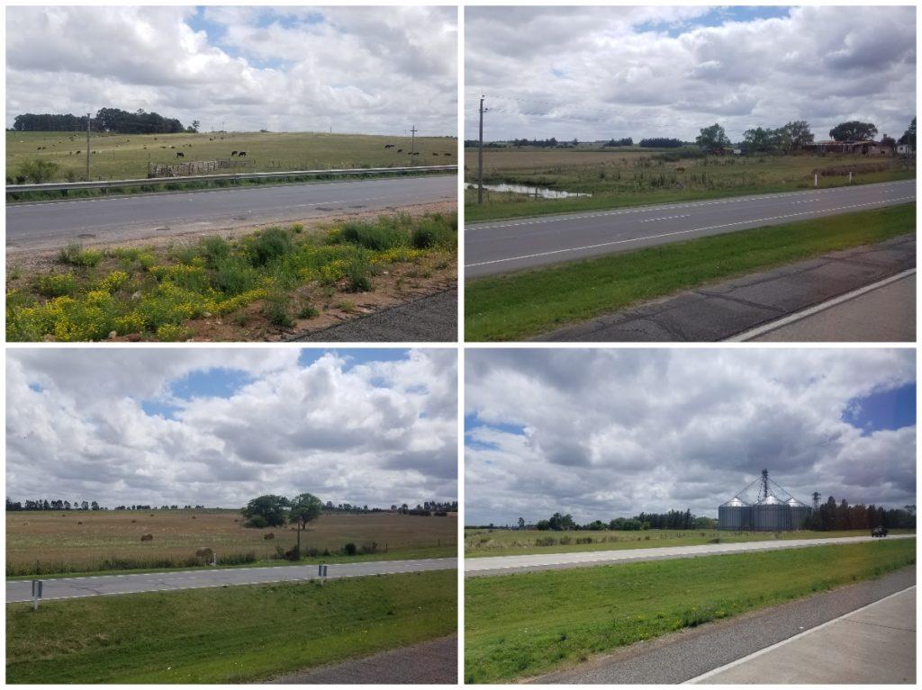ウルグアイ・バスの旅。牧草地と放牧風景。