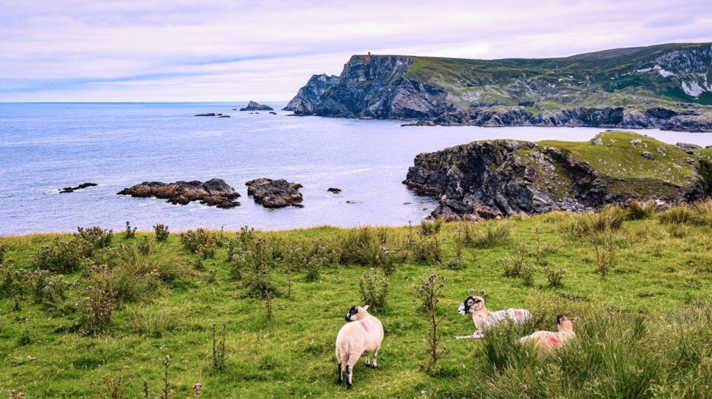 アイルランドの田舎の風景