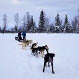 アラスカ・フェアバンクスの犬ぞり体験ツアー