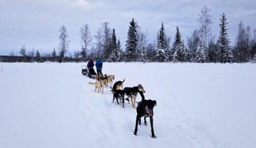 【アラスカ】フェアバンクス追加記事:感動の犬ぞり体験 ☆
